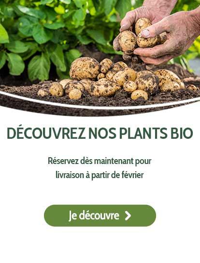 Découvrez nos plants bio